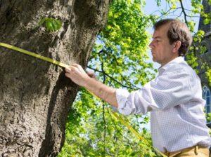 Levantamento Arbóreo para Identificação
