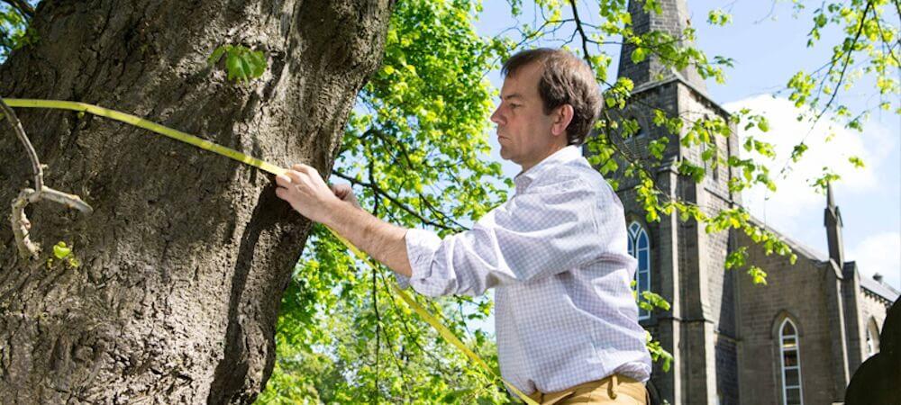 Levantamento Arbóreo